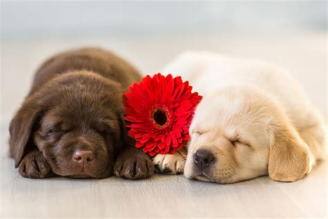 top 10 cutest dogs top 10 cutest small breeds on the planet top10ns