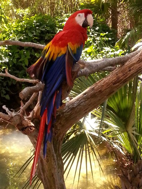 scarlet macaw parrot by bryanshooting on deviantart