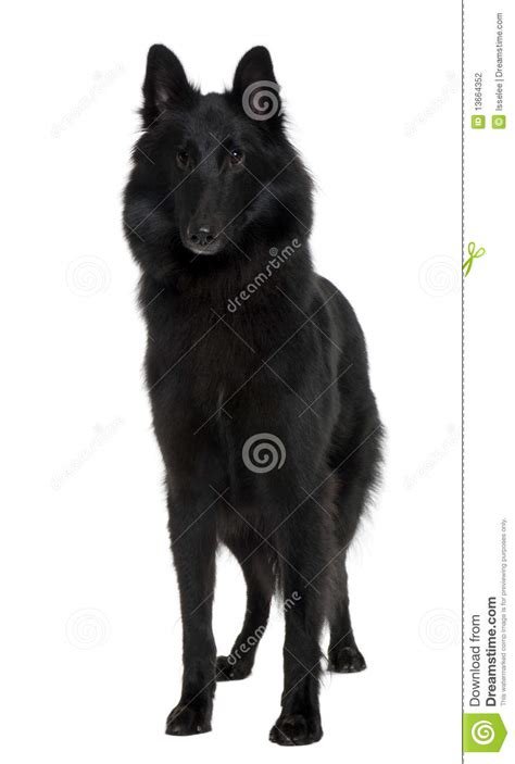 standing dog front view wesharepics