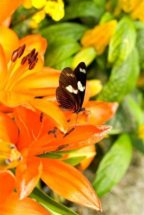 heat l for hummingbirds 21 plants and flowers to attract butterflies and