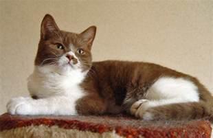 pretty cat poc