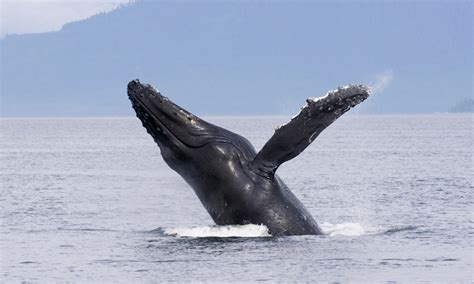 buy a boat marina del rey marina del rey sportfishing up to 53 off marina del