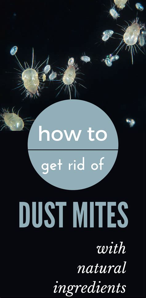 how to get rid of dust mites in bed how to get rid of dust mites with natural ingredients