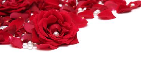 red rose petals  pearls widescreen wallpaper wide wallpapersnet
