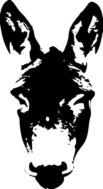donkey face head  vector graphic  pixabay