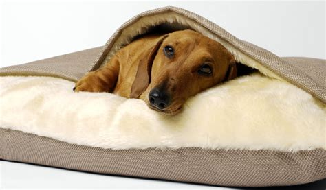 dachshund bed tunnel beds photo gallery