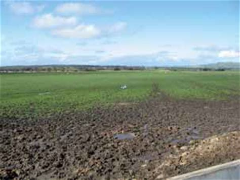 what is pugging pasture recovery from pugging damage managing soils dairy agriculture