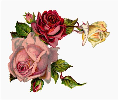 free rose corner cliparts download free clip art free