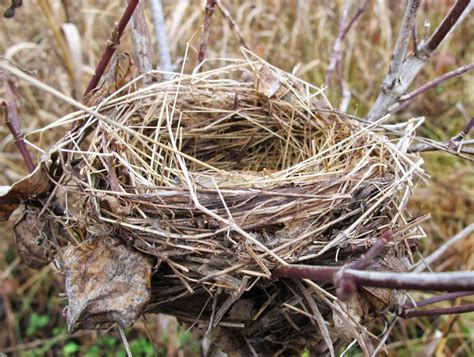 The Birds Nest blue barrens bird nests in the field