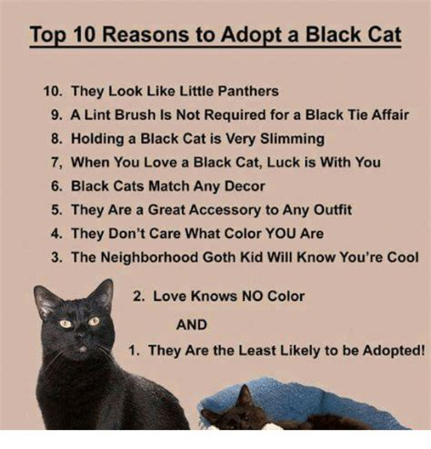 Top 10 Reasons To Adopt A by 25 Best Memes About Memes