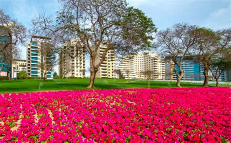 florist jobs in dubai flowers dubai plants in a year emirates 24 7