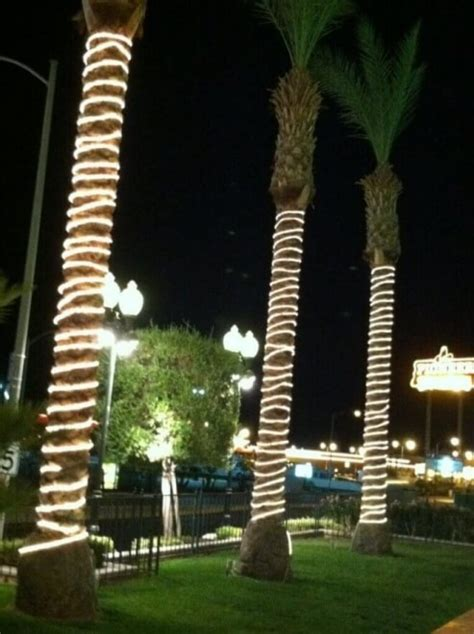illuminating palm trees with led rope lights birddog
