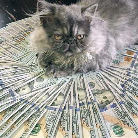 cats   richer    imagine klykercom