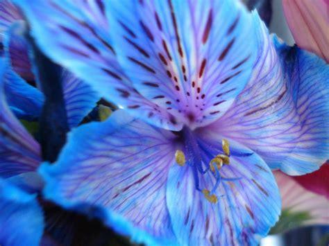 beautiful blue color again among nature s flowers indigo night school survivor sanctuary eternal summer of the