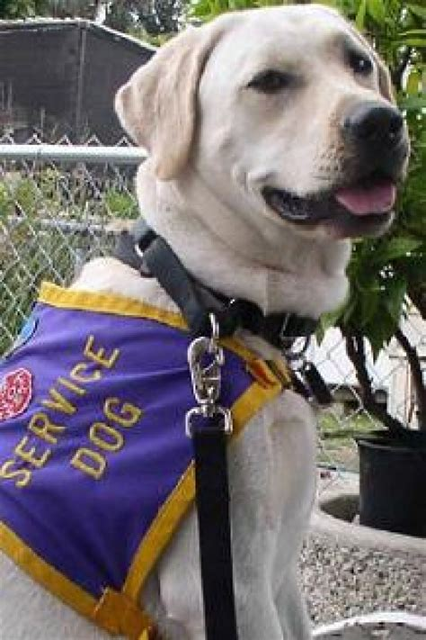 how to a ptsd service government funds ptsd service study the bark