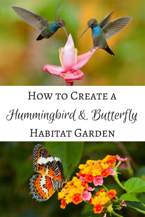 Tips For Creating A Hummingbird And Butterfly Habitat How To Create A Flower Garden