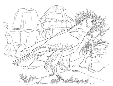 free sonoran desert animals coloring pages