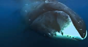 a whale of a lifespan science news for students