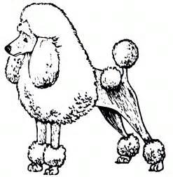 poodle coloring pages poodle coloring coloring pages