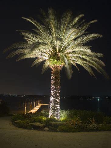 Inspiring Landscape Tree Lighting 9 Landscape Lighting Palm Tree Lighting