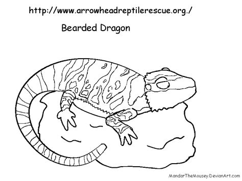 monitor lizard coloring pages animal coloring monitor lizard coloring pages monitor