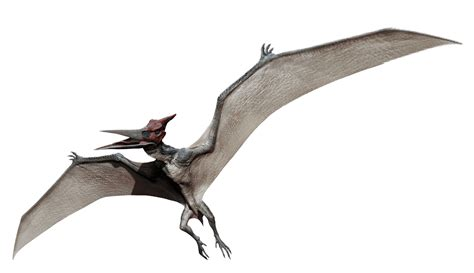 wiki jp datei pteranodon png jp wiki fandom powered by wikia
