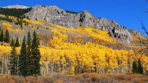 colore denver denver 196 244 s spectacular fall color show lasts two months