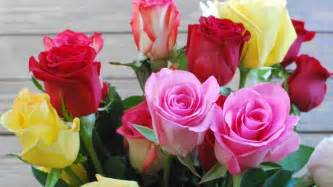 what do different color roses what is the meaning of different colors reference
