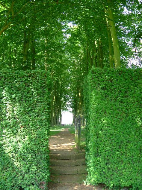 Lovely Summer Gardens #4: DSCF4893_1.JPG