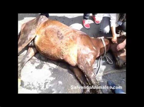 el caballo y el muchacho las cr 243 un lazo fuerte entre caballos y humano vidoemo emotional video unity