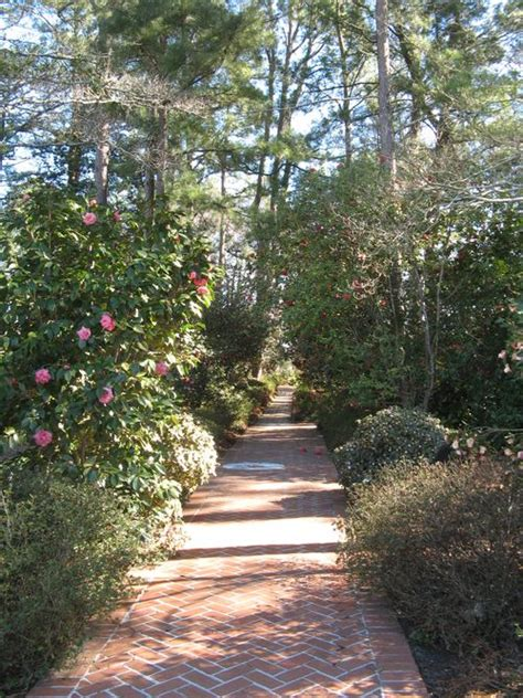 Massee Gardens by Fluffy Flowers Festival Of Camellias Formal Camellia Garden
