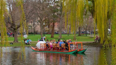 boston swan boats donation request things to do in boston during the spring
