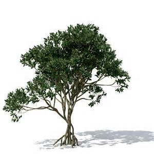xfrog trees asiatic mangrove