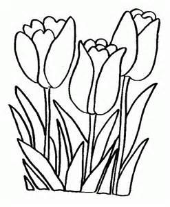 tulipanes pintar im 225 genes fotos
