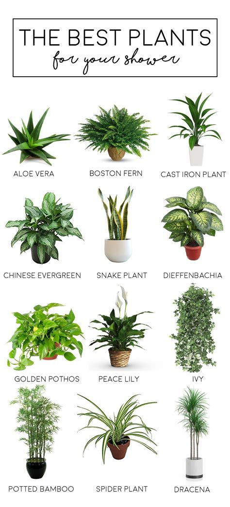 best plants blog
