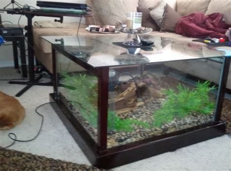 Aquarium Coffee Table Diy Diy Aquarium Coffee Table Petdiys