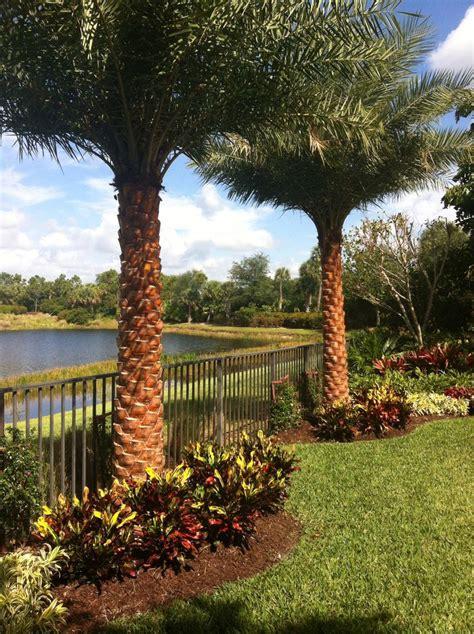 sylvester date palm landscape install complete landscape