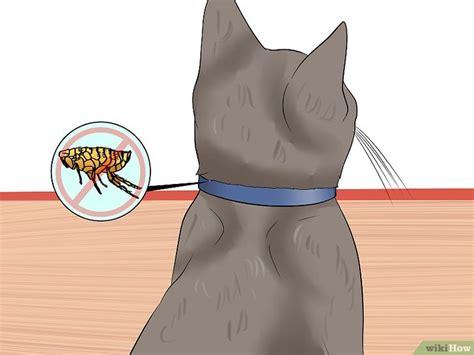 Pasaran Karpet Permadani cara memeriksa kutu pada kucing wikihow