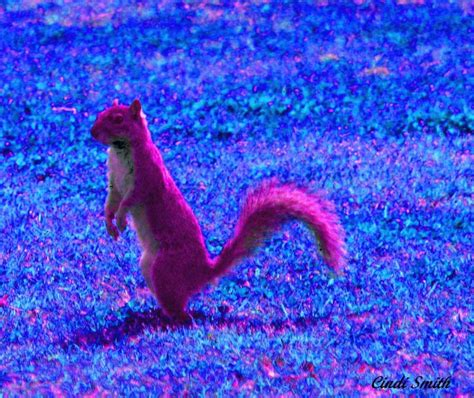 pink squirrel photo cindi smith photos at pbase com