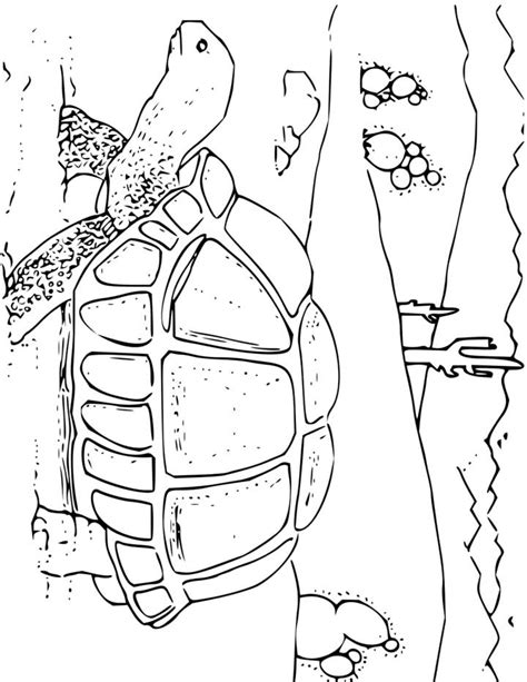 desert coloring pages for kids az coloring pages desert animals coloring pages az coloring pages