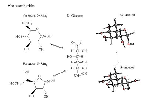 carbohydrates molecular structure carbohydrates are poly hydroxy compounds which form a ring