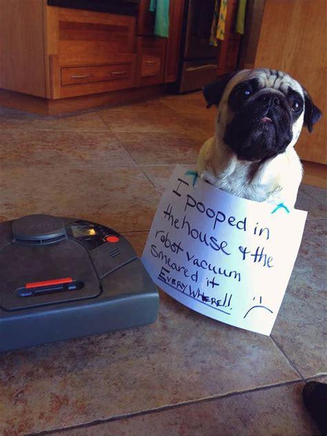 dog shaming  pics