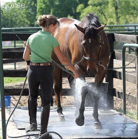horse bathroom horse grooming challenges