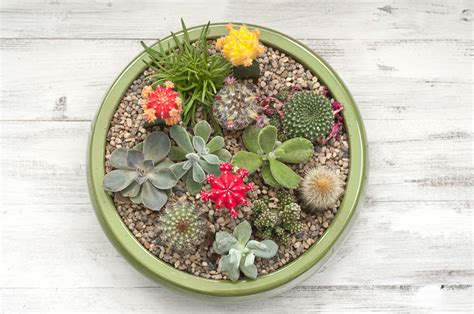 How To Propagate A Succulent Cookie And Kate - a succulent plant container garden