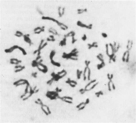 human mun pictures human karyotypes
