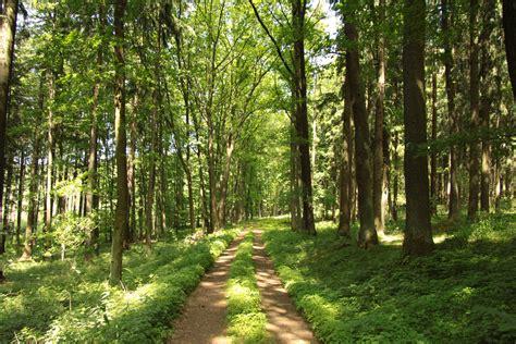 In Nature free restorative nature strolls earth