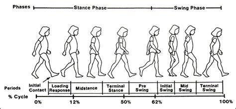 swing phase of walking david sutherland