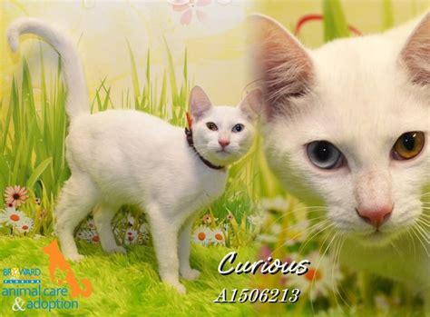 broward adoption free adoptions at broward county animal care and adoption