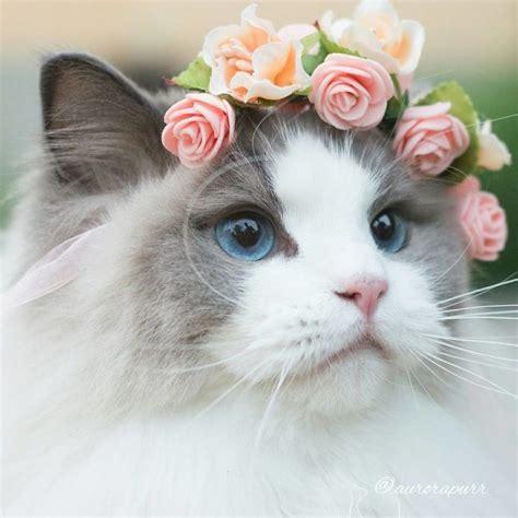 imagenes surrealistas de gatos las 25 mejores ideas sobre gatos en pinterest gato