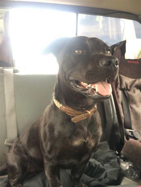 lost dogs washington home facebook